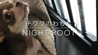 チワワのわちち 〜ナイトルーティン〜
