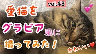 【猫好き必見!】愛猫をグラビア風に撮影してみた!