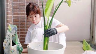 ただただ植物を植え替える。#Shorts