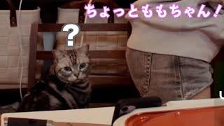 猫に椅子を取られる伊織もえ